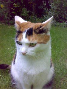 Low Iodine Cat Food Uk